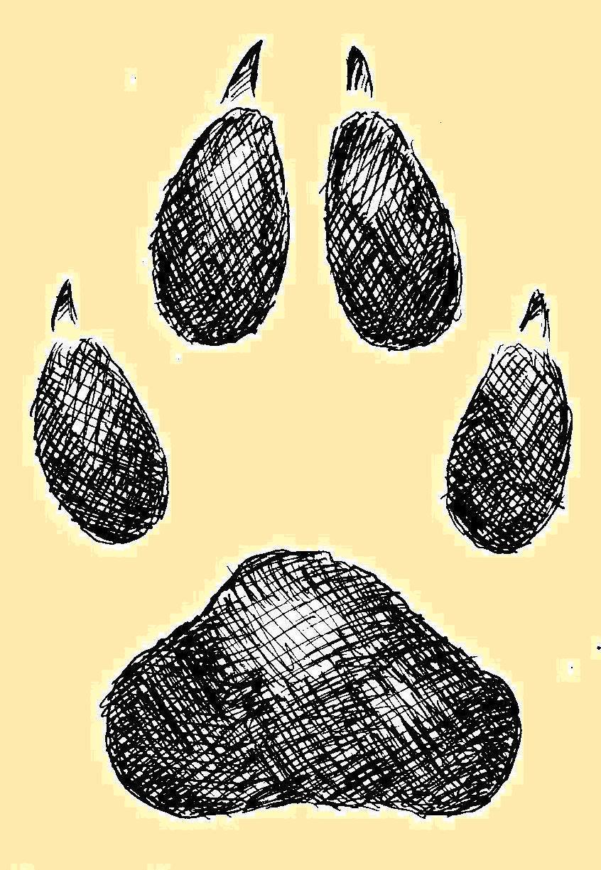 stopa vlka
