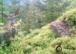 mlady jelen lesni
