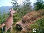 lan jelena lesniho
